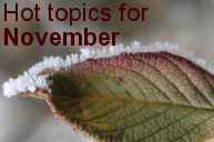 Hot Topics for November
